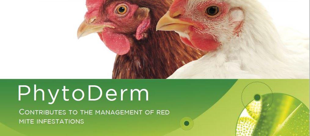 Mieszanina olejków eterycznych innowacyjnym sposobem w walce z ptaszyńcem kurzym